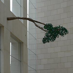 TN-tGG-Branch