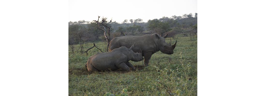 Rhino-400x1100-02