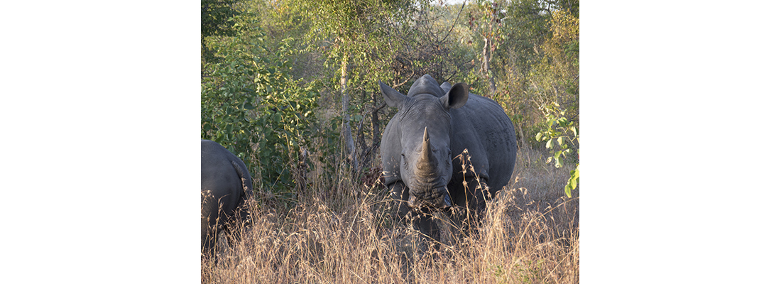Rhino-400x1100-03
