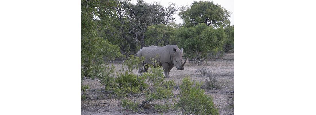 Rhino-400x1100-04