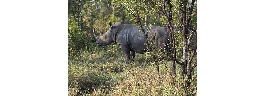 Rhino-400x1100-05