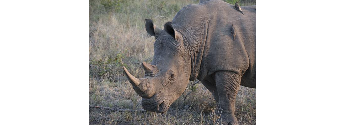 Rhino-400x1100-06