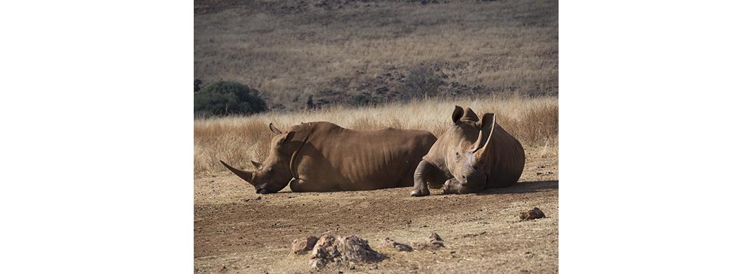 Rhino-400x1100-07