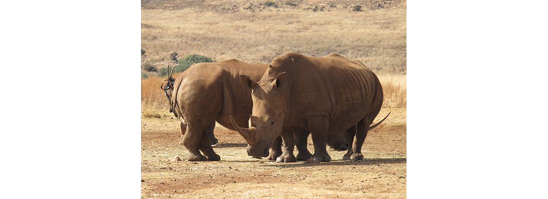 Rhino-400x1100-09