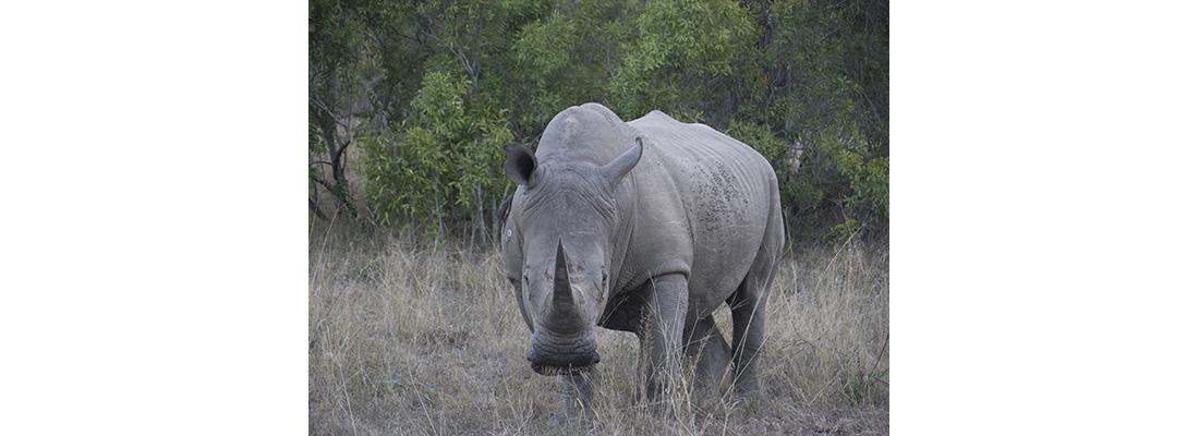 Rhino-400x1100-13