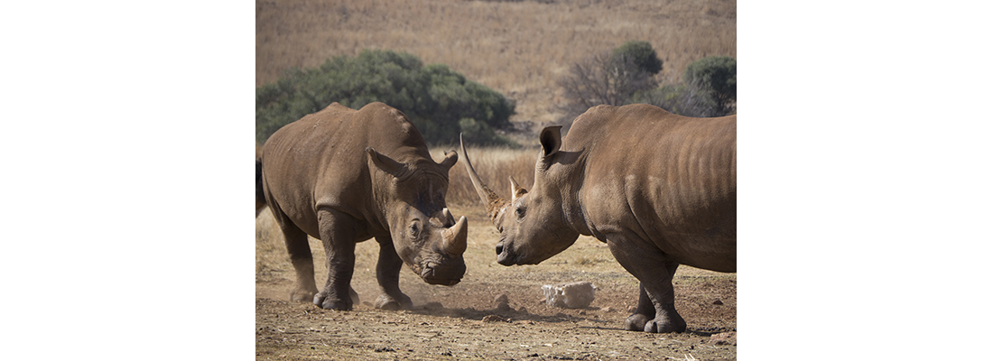 Rhino-400x1100-16
