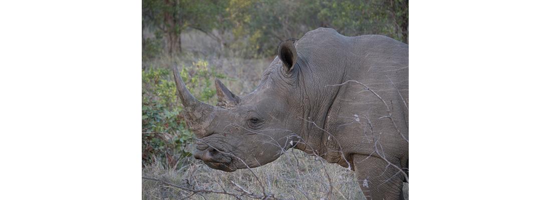 Rhino-400x1100-17