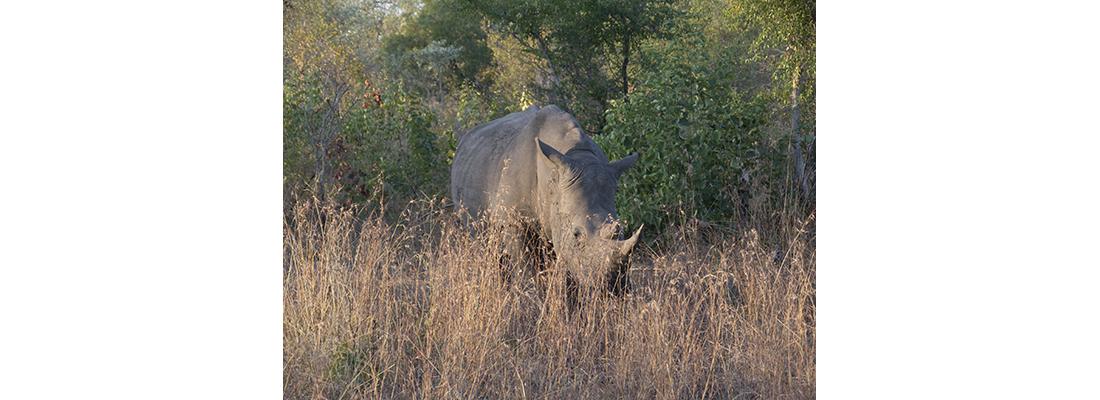 Rhino-400x1100-20