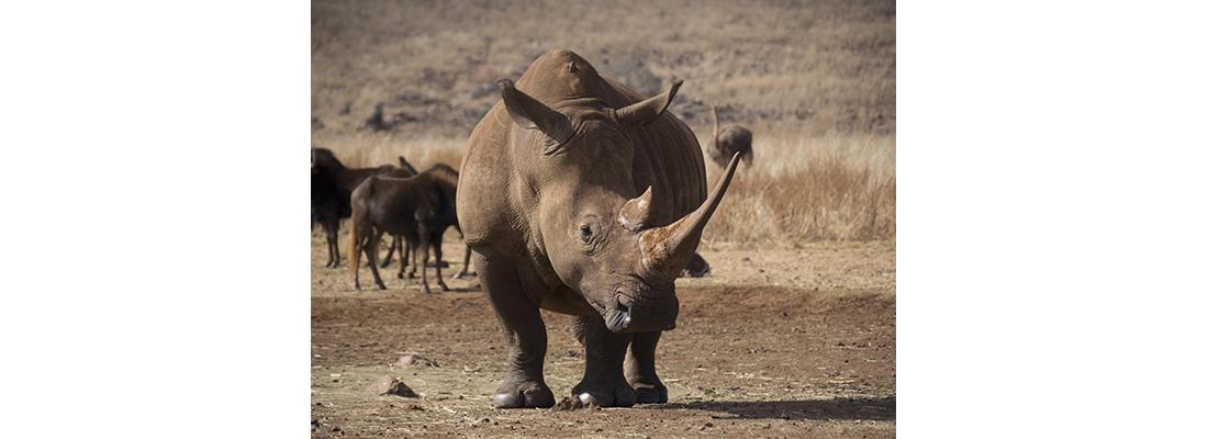 Rhino-400x1100-24