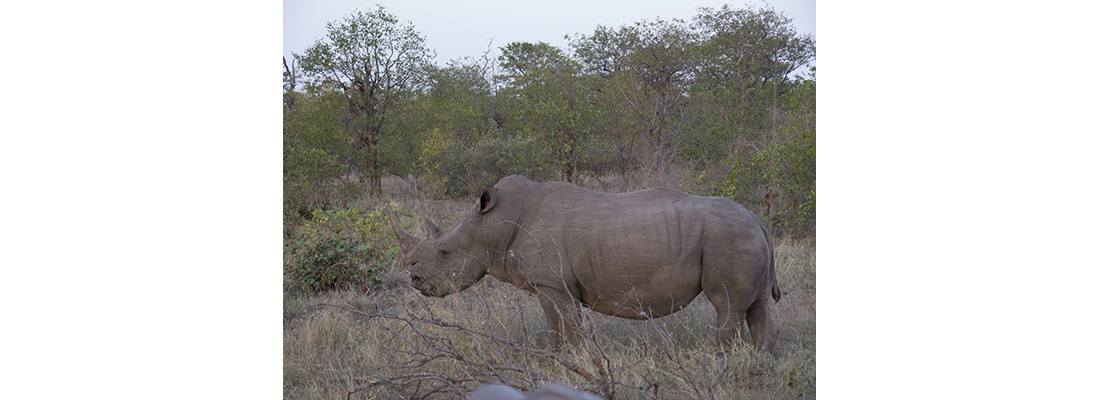 Rhino-400x1100-25