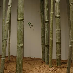 TN-Bamboo